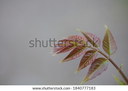 Toon young leaves in spring Royalty-Free Stock Photo #1840777183
