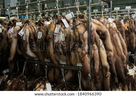 Expensive brown mink and sable fur skins hanging at auction exhibition Royalty-Free Stock Photo #1840966390