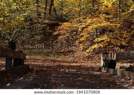 Picture of a walkway bridge over a creek during the fall.