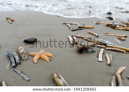 Starfish and other shells at the shore of a beach in the Netherlands on a cloudy day in the summer with sand and water Royalty-Free Stock Photo #1841208682