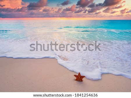 star fish on sandy beach with sunset Royalty-Free Stock Photo #1841254636