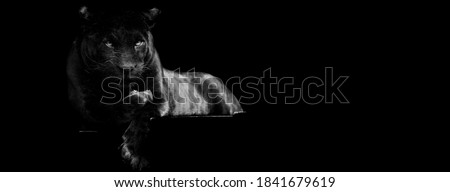 Template of Black panther with a black background