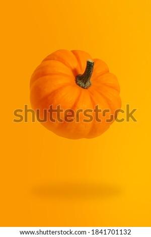 Pumpkin levitation modern banner background with orange natural color. Vegetable pumpkin poster or wallpaper. Pumpkin cooking master class. Thanksgiving day template. Autumn recipe picture. Vegan life