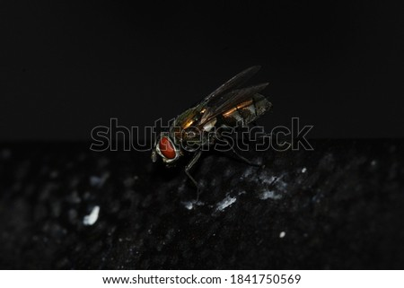 Flies and large insects in the middle of the desert