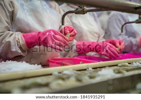 Process shrimp at factory in Vietnam Royalty-Free Stock Photo #1841935291