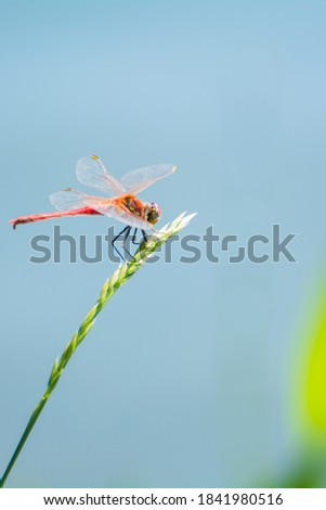 Close-up photo of a dragonfly sitting on a trove, selective focus