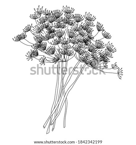 Dill or fennel flowers and leaves. Stylized hand drawn vector illustration. Floral elements isolated on white background. Royalty-Free Stock Photo #1842342199
