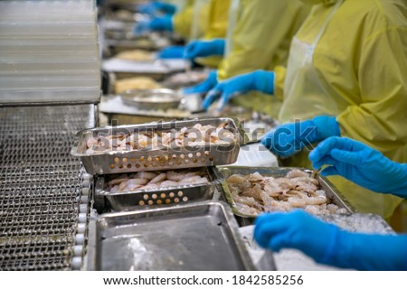 Processing crispy breaded shrimp in a food factory in Vietnam Royalty-Free Stock Photo #1842585256