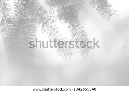 Blurred overlay effect for photo. Gray shadows of fir tree branches on a white wall. Abstract neutral nature concept background for design presentation. Shadows for natural light effects Royalty-Free Stock Photo #1842655348