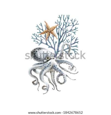 watercolor illustration of blue octopus with coral and starfish on white background, marine style hand painted close up