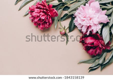 Beautiful peonies flowers on beige background. Spring or summer floral background.