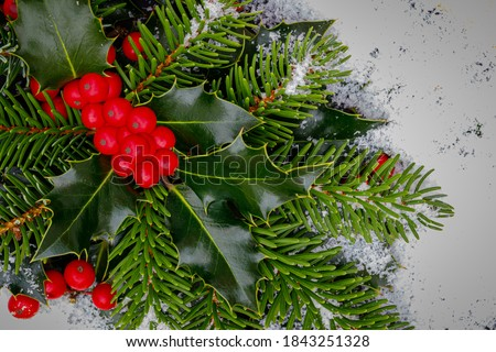 Christmas background, card. Evergreen Holly Bough. Christmas holly red berries with green leaves and fir branches, closeup. Ilex aquifolium Holly green foliage with matures red berries.  #1843251328