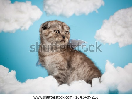 Cute charming angel shaped scottish kitten with purple little wings sits on a blue sky background among white clouds. Portrait of lovely dark gray striped fluffy cat.
