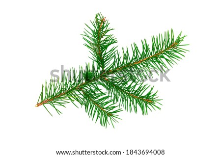 Fir tree twig. Christmas tree branch. Isolated on white background. Fresh bright green coniferous foliage. Christmas decorative element. Closeup spruce twig. Decoration object for holiday design. Royalty-Free Stock Photo #1843694008