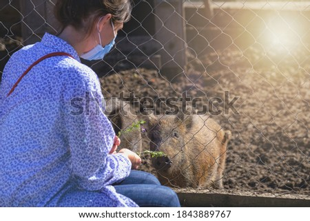 Happy woman watching and feeding wild boar in zoo. woman in protective mask visit zoo in pandemic days. piggy animals in zoo eating from hand on warm day. #1843889767