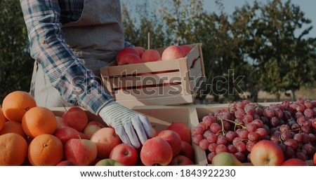 The farmer puts ripe apples on the counter. Farmer's market and products from local producers Royalty-Free Stock Photo #1843922230