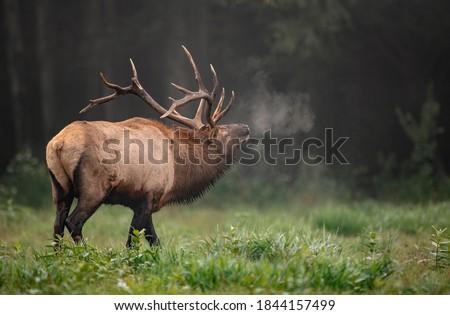 Bull Elk Rut in Autumn  Royalty-Free Stock Photo #1844157499