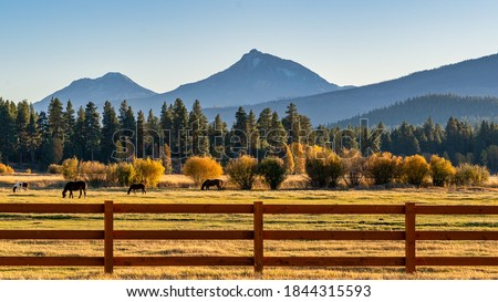 Fall Color Trees on a Ranch with Fence and Horses Royalty-Free Stock Photo #1844315593
