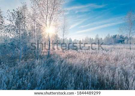 November dreamy frosty morning. Beautiful autumn misty cold sunrise landscape in blue tones. Fog and hoary frost on a scenic high grass copse. Royalty-Free Stock Photo #1844489299