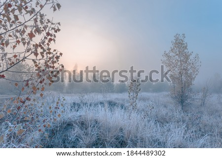 November dreamy frosty morning. Beautiful autumn misty cold sunrise landscape in blue tones. Fog and hoary frost at scenic high grass copse. Royalty-Free Stock Photo #1844489302
