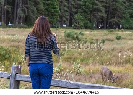 Pretty woman takes pictures on the smartphone of the wild deer at Yosemite National Park, USA.