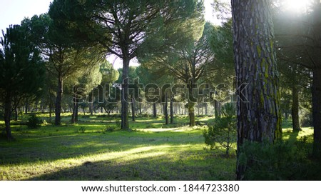 Europe South Portugal Nature Pines Royalty-Free Stock Photo #1844723380