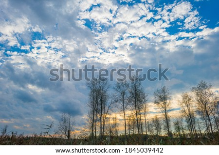 Trees in autumn colors in a field in a blue cloudy sunlight at fall, Almere, Flevoland, The Netherlands, October 31, 2020 Royalty-Free Stock Photo #1845039442