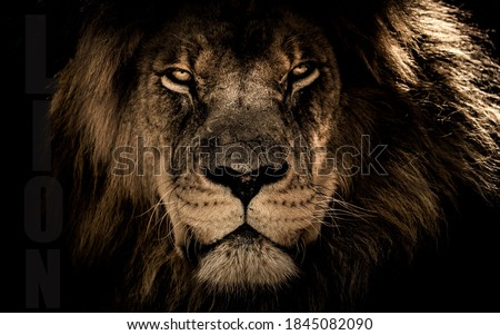 Portrait of a beautiful lion, lion in dark Royalty-Free Stock Photo #1845082090