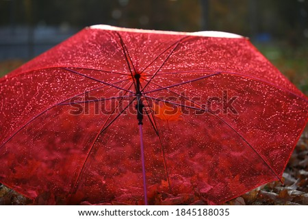 The umbrella color is red for a rainy day.Transparent roof with raindrops.Open dome with autumn leaves background.Concept of the autumn season.Selective focus #1845188035