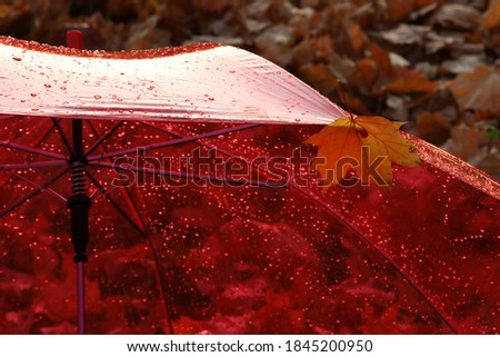 The umbrella color is red for a rainy day.Transparent roof with raindrops.Open dome with autumn leaves background.Concept of the autumn season.Selective focus #1845200950