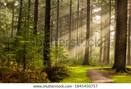 Forest trees sunbeams path in morning. Sunbeams forest trees. Sunbeams in morning forest. Forest pathway in sumbeam morning #1845450757