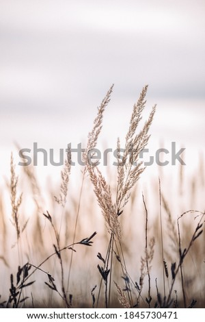 Sunset in the field. Close view of grass stems against dusty sky. Calm and natural background Royalty-Free Stock Photo #1845730471