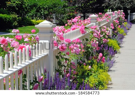 Garden fence with pink roses, sage, speedwell and catmint #184584773