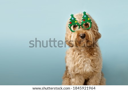 Dog with Christmas tree glasses Royalty-Free Stock Photo #1845921964