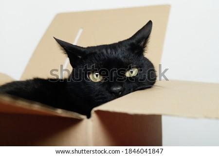 black cat showing its face inside a shipping carton