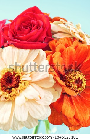 Fall Flowers with a Red Rose Close Up on a Blue Background