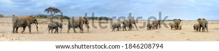 Panorama of many elephants in National park of Kenya, Africa Royalty-Free Stock Photo #1846208794