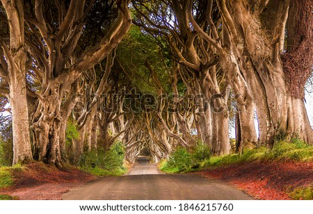 Tunnel of trees road. Road through trees tunnel. Trees tunnel road view. Trees tunnel road #1846215760