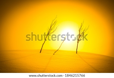 Three young trees in the winter sun. Winter sun trees. Winter sun view. Trees on winter sun #1846215766