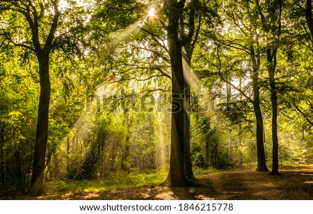 Forest sunbeams in morning time. Sunbeams forest trees. Sunbeams in morning forest. Forest sunbeams #1846215778