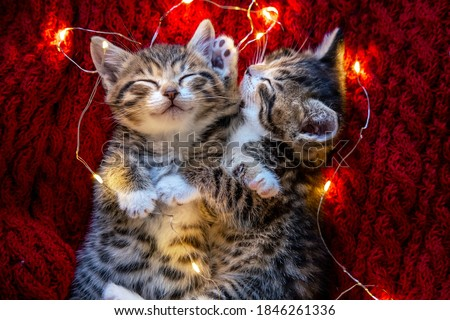 Christmas cats. Two cute little striped kittens sleeping on red background. Kitty with Christmas garland lights . Royalty-Free Stock Photo #1846261336