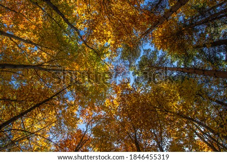 Autumn colorful trees. Warm autumn sun shining through golden tree tops with beautiful bright blue sky. Fall natural landscape. Beautiful fall season concept copy space. Tree top shot from below