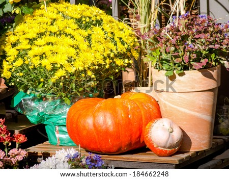 picture of harvest festival with flowers and pumpkin