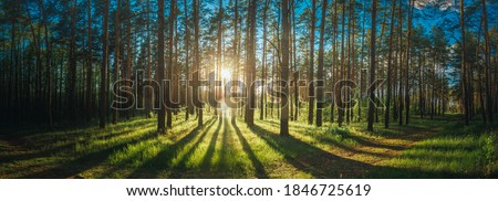 Beautiful Sunset Sunrise Sun Sunshine In Sunny Summer Coniferous Forest. Sunlight Sunbeams Through Woods In Forest Landscape. Panorama Panoramic View Royalty-Free Stock Photo #1846725619