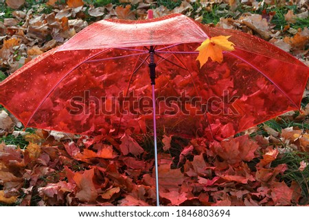 The umbrella color is red for a rainy day.Transparent roof with raindrops.Open dome with autumn leaves background.Concept of the autumn season.Background image #1846803694