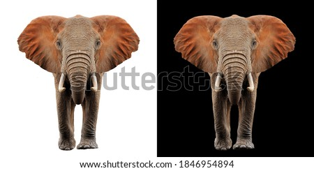 Elephant isolated on white and black color background Royalty-Free Stock Photo #1846954894