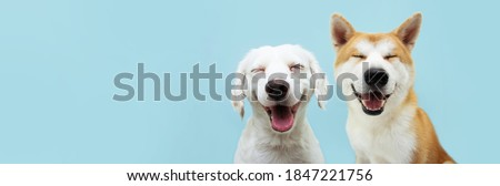 Banner two smiling dogs with happy expression. and closed eyes. Isolated on blue colored background. Royalty-Free Stock Photo #1847221756