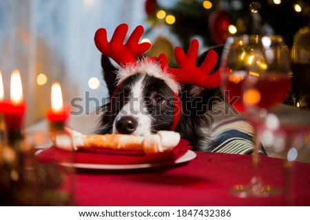 Close-up portrait of a dog wearing reindeer's horns celebrating Christmas. Bone on a plate as a treat on served holiday table. Christmas vibes #1847432386