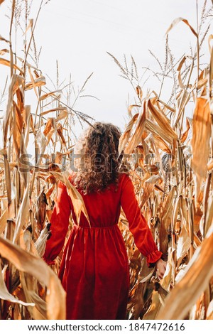 The girl in a red dress gets among the yellow stalks of corn. Corn field. #1847472616