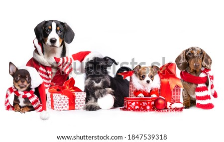 group dogs wearing a santa hat,  Christmas dogs